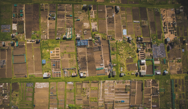 Allotments - Demand Your Release Now!